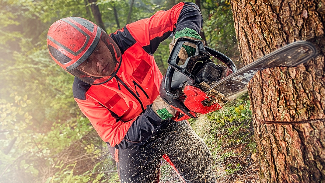 Forstarbeiter : Arbeiten als Forstwirt in Wald und Forst