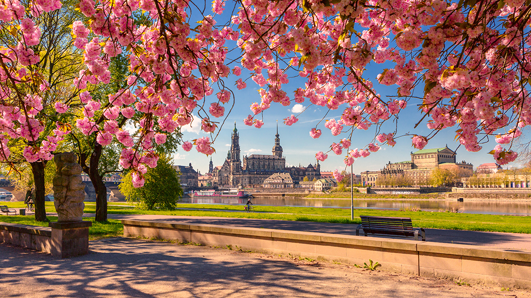Top- Arbeitgeber Dresden
